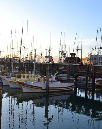 Colorful iconic fishing boats of Fisherman's Wharf in San Francisco