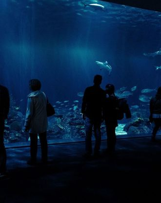 People fish watching within a dark tunnel of the Shedd Aquarium