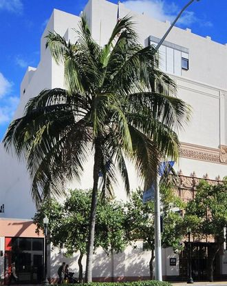Palm tree and front view of the Wolfsonian - Florida International University