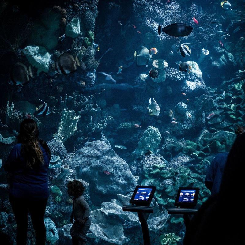 Girl watching fish swim from a darkened corner of the Shedd Aquarium