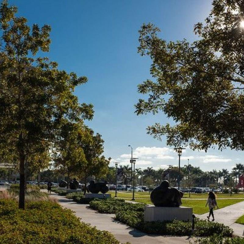 Clear skies and sunshine hitting tall trees on Florida International University's campus